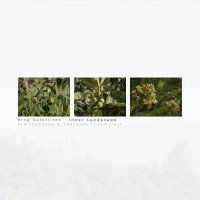 Bing Satellites - Inner Landscape (Atmospheres & Textures Volume Six)